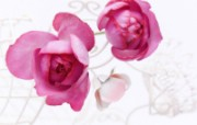 婚礼鲜花 节日壁纸