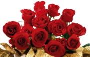 玫瑰写真壁纸 节日壁纸