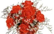 玫瑰写真壁纸 玫瑰写真壁纸 节日壁纸