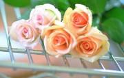 情人节玫瑰花壁纸 节日壁纸