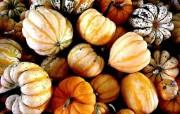 万圣节南瓜 南瓜特写 万圣节南瓜图片壁纸 Desktop WAllpaper of Pumpkins 万圣节南瓜南瓜特写 节日壁纸