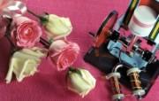 鲜花与仪器 静物壁纸