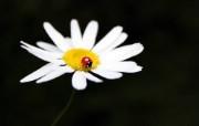 (单反)小瓢虫―多分 精选壁纸