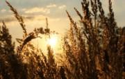 光芒的稻草(多分辨率 精选壁纸