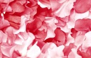 花瓣(多分辨率) 精选壁纸