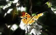 蝴蝶(多分辨率) 精选壁纸