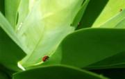 甲虫 精选壁纸 精选壁纸