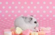可爱小老鼠 精选 精选壁纸