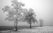 冷冻树 精选壁纸