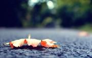 落在路上的树叶 (单 精选壁纸