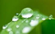 绿草上的水滴 (多分 精选壁纸