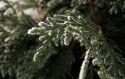 绿色的冬天 精选壁纸