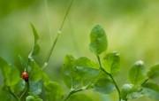 绿叶上的甲壳虫 精选 精选壁纸