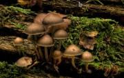 蘑菇 精选壁纸