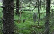 森林 精选壁纸