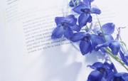 紫罗兰(多分辨率) 精选壁纸