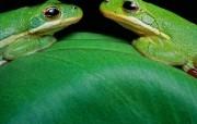 生活中的绿色 生活中的绿色 其他壁纸