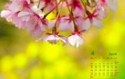 四月:花开的季节日历壁纸 其他壁纸
