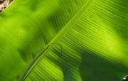 养眼的绿色主题壁纸 其他壁纸