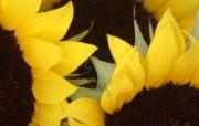 最新高清花卉壁纸 最新高清花卉壁纸 其他壁纸