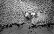 One Giant Leap for Mankind Apollo 11 Launch Spectators 等待点火升空的观众 阿波罗11号登月40周年纪念壁纸 人文壁纸