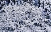冬韵 1 冬韵1 人文壁纸