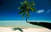 透过镜头 Bora Bora Palm French Polynesia 博拉博拉岛棕榈树桌面壁纸 国家地理杂志2008年度最佳图片 人文壁纸
