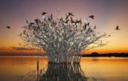 游历大千世界 国家地理杂志每日一图2010五六月摄影壁纸 巴西 潘塔纳尔沼泽图片壁纸 国家地理杂志 2010 56月壁纸 人文壁纸