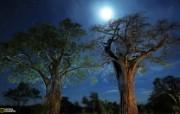 游历大千世界 国家地理杂志每日一图2010五六月摄影壁纸 坦桑尼亚的猴面包树图片壁纸 国家地理杂志 2010 56月壁纸 人文壁纸