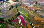 游历大千世界 国家地理杂志每日一图2010五六月摄影壁纸 云南梯田图片壁纸 国家地理杂志 2010 56月壁纸 人文壁纸