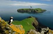 游历大千世界 puffin shiant islands 希恩特群岛 角嘴海雀图片壁纸 国家地理杂志每日一图2010三月摄影壁纸 人文壁纸