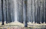 游历大千世界 国家地理杂志每日一图2010四月摄影壁纸 塞尔维亚的树林图片壁纸 国家地理杂志每日一图2010四版 人文壁纸