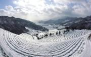 韩国冬景 全南宝城茶园 韩国映像馆韩国旅游宣传壁纸 人文壁纸