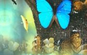 韩国旅游 全南咸平蝴蝶庆典 韩国映像馆韩国旅游宣传壁纸 人文壁纸