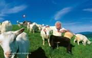 世界公园 瑞士夏季旅游名胜 Unterchapf Eastern Switzerland 瑞士东部图片壁纸 世界公园瑞士夏季旅游名胜 人文壁纸
