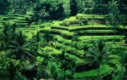 巴厘岛梯田壁纸 文化之旅地理人文景观壁纸精选 第二辑 人文壁纸