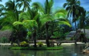 文化之旅 地理人文景观壁纸精选 第一辑 Palm Trees in Oahu 夏威夷 瓦胡岛棕榈树图片壁纸 文化之旅地理人文景观一 人文壁纸