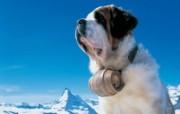 温泉与滑雪 瑞士冬季旅游景点壁纸 Matterhorn 完美的雪山 马特洪峰图片壁纸 温泉与滑雪瑞士冬季旅游景点壁纸 人文壁纸