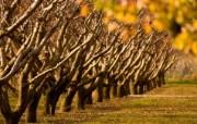 天堂之国 新西兰如画风光壁纸 1920 1200 New Zealand A fruit orchard in Cromwell New Zealand 新西兰风光第二集 人文壁纸