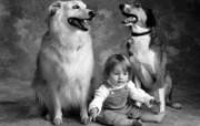 人与狗 1 7 人与狗 人物壁纸