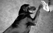 人与狗 1 2 人与狗 人物壁纸