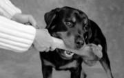 人与狗 2 18 人与狗 人物壁纸