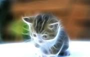 光线描绘猫科动物壁纸 壁纸2 光线描绘猫科动物壁纸 设计壁纸