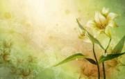 矢量艺术花纹花朵 宽屏壁纸 壁纸19 矢量艺术花纹花朵 宽 设计壁纸