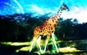 野生生物 幻彩荧光宽屏壁纸 壁纸3 野生生物 幻彩荧光宽 设计壁纸