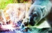 野生生物 幻彩荧光宽屏壁纸 壁纸9 野生生物 幻彩荧光宽 设计壁纸
