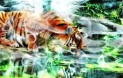 野生生物 幻彩荧光宽屏壁纸 壁纸11 野生生物 幻彩荧光宽 设计壁纸