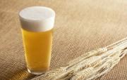 冰凉夏日酒香 酒水饮品高清摄影 夏日啤酒图片 啤酒和小麦图片 冰凉夏日酒香酒水饮品高清摄影 摄影壁纸