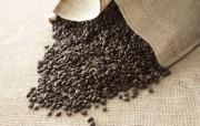 咖啡豆图片 品味咖啡摄影 日本茶道文化与健康饮品 摄影壁纸
