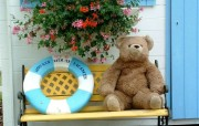 泰迪熊的相册 teddy bear Photo Album 摄影壁纸